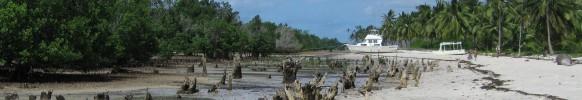 Degraded-mangroves_Seahorse