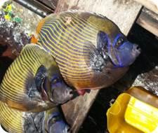 Pemba-fisheries-1