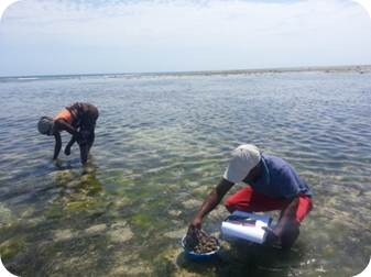 Pemba Fisheries