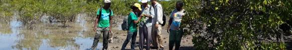 SPACES team identifying mangrove associates at Olumbe