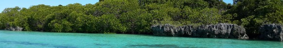 Vamize beautiful mangroves groing on a rocky environment